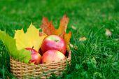 Apples in basket — Stock Photo