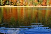 Forest lake in fall — Stock Photo