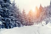 冬の風景 — ストック写真