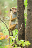 Monkey in the living nature — Foto Stock