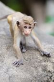 Monkey in the living nature — Stockfoto