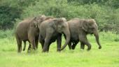 Elefanter — Stockfoto