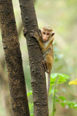 Monkey in the living nature — Stock Photo