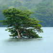 One lonely tree on the banks of a lake — Stock Photo #60763117