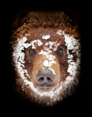 Portrait de l'ours — Photo