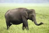 Sloni — Stock fotografie