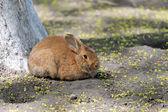 Кролик — Стоковое фото