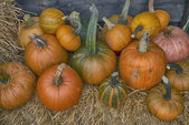 Assorted pumpkins — Stock Photo