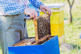 Beekeeper checking hive — Stock Photo