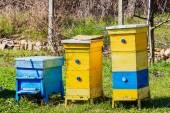 Blue and yellow beehives in garden — Stock Photo