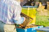Beekeeper checking hive — Stockfoto