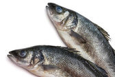 Sea bass fish on withe background — Stock Photo