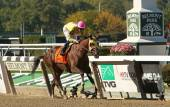 Belle Gallantey Wins The Beldame Stakes — Foto Stock