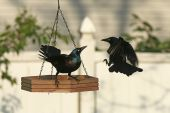 Feeder Confrontation — Stock Photo