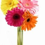 Gerberas in Vase — Stock Photo #64556371