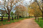 Tree lined dirt road in Autumn — Foto Stock