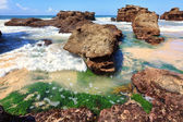 Seagrass plants among the rocks at low tide, Australia — Stock Photo