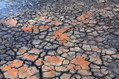 Drought  Rain falls on dry parched cracked earth — Stock Photo