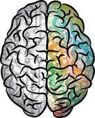 Human brain color — Stock Vector