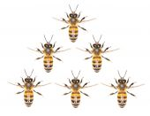 A swarm of bees on a white background — Stock Photo