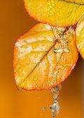 Doğa — Stok fotoğraf