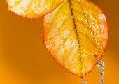 Nature — ストック写真