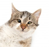 Cat . — Stok fotoğraf