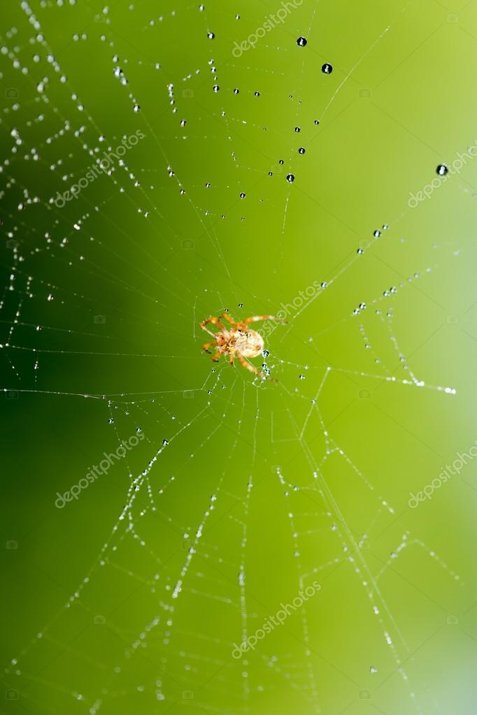 Картинки насекомых в природе
