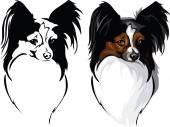 Dog breed papillon — Stock Vector