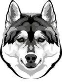 Head husky — Stock Vector