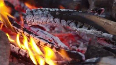 Bonfire, campfire — Stock Video
