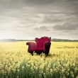 Red chair in a field full of flowers — Stock Photo #79715740