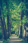 Retro Style Forest Path — Stock Photo