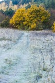 Frosted autumnal meadow — Stock Photo