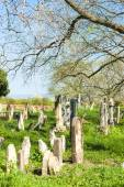 Jewish Cemetery, Podivin, Czech Republic — Stock Photo