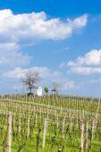 Spring vineyards near Nemcicky, Czech Republic — Stock Photo