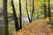 Peklo Valley in autumn, Czech Republic — Stock Photo
