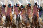 Excludes of caught pheasants — Stock Photo
