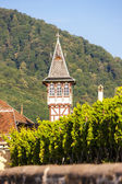 Winery with vineyard, Ribeauville, Alsace, France — Stock Photo