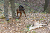 Hunting dog with hunter in forest — Stock Photo