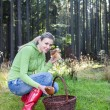 Woman picking mushrooms — Stock Photo #56828101
