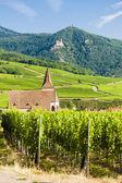 Kostel s vinicí, hunawihr, alsasko, francie — Stock fotografie