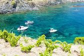 Vineyard on Cap de Peyrefite — Stock Photo