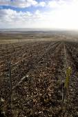 Vineyards of Champagne Region — Stock Photo