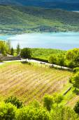 Vineyard and St Croix Lake at background — Stock Photo