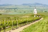 Kapel met wijngaard in de buurt van velke bilovice — Stockfoto