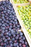 Plums, market in Nyons — Stock Photo