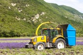 Lavender harvest, Rhone-Alpes, France — Stock Photo