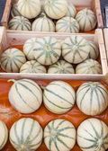 Melons cantaloupe, market in Nyons, Rhone-Alpes, France — Stock Photo