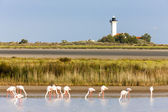 Flamingos and Gacholle lighthouse, Parc Regional de Camargue, Pr — Stock Photo